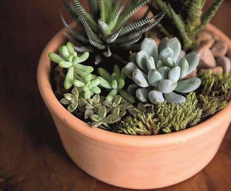11. Vasos de barro são excelentes para o cultivo de suculentas – Foto: Via Pinterest