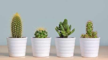 12. Vasos iguais, mas com diferentes espécies de suculentas ficam ótimas na decoração – Foto: Moda sem limites