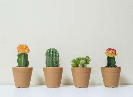 24. Vasos para suculentas de barro são ótimos para qualquer espécie – Foto: Freepik