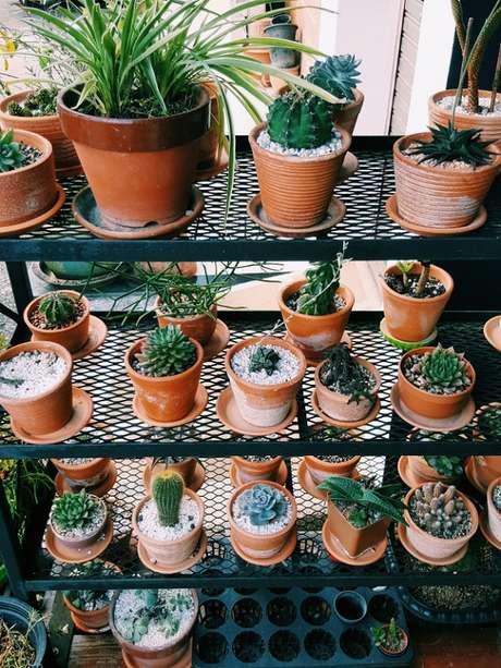 40. Diversos vasos formam um lindo jardim de suculentas – Foto: Freepik