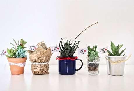 43. As suculentas são plantas incríveis que podem ser cultivados em diferentes vasos