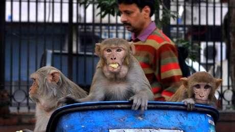 Alta densidade de humanos em cidades e degradação de habitat de animais provocam a emergência de mais epidemias