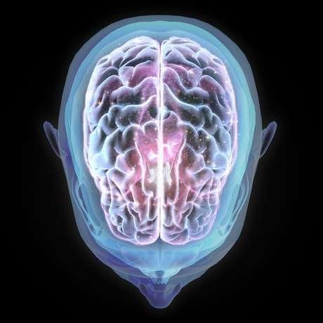Mais de 360 cientistas de vários países contribuíram para o estudo de 'uma parte muito importante do cérebro'