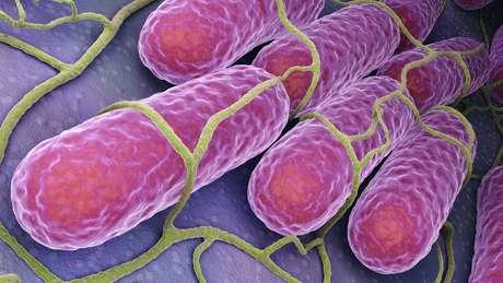 Geralmente, a salmonela é encontrada no intestino de animais e pessoas e é liberada pelas fezes