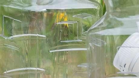 Armadilhas estão sendo espalhadas pelas regiões em que 'vespas assassinas' apareceram