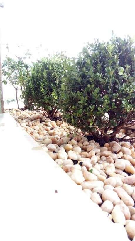27. Seixos com plantas pequenas. Projeto de Casa Green Paisagismo