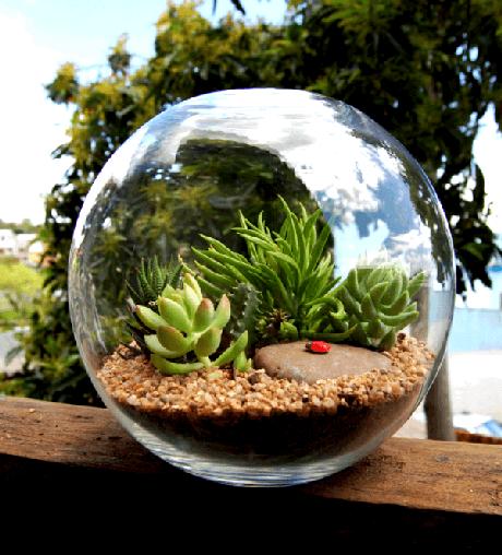 62. Cultive diferentes suculentas no terrário. Fonte: Pinterest