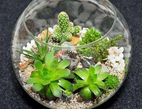 18. O terrário em aquário fica lindo com suculentas e cactos variados.
