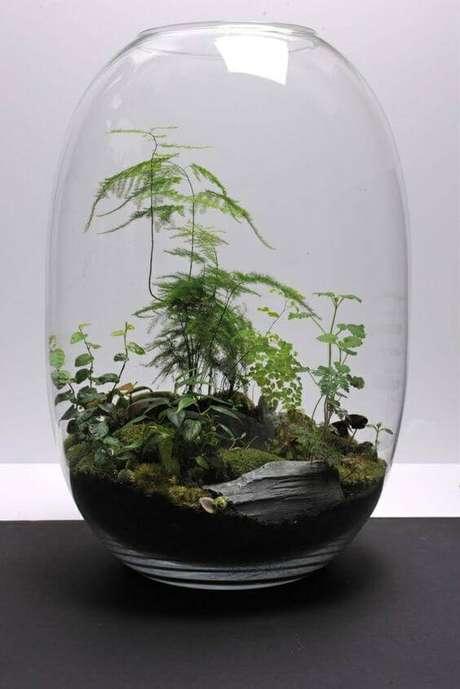 36. Os vasos de vidro comportam plantas mais altas.