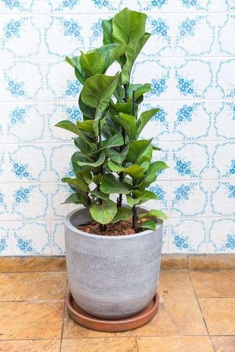 42. Vaso grande de cimento na casa moderna – Via: Cultivo da Horta