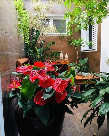 57. Se inspire em diferentes modelos de jardim para formar o seu. Fonte: Marina Lobo