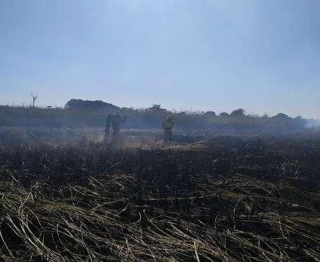 Bombeiros combatem focos de queimada em reserva de Presidente Epitácio, no oeste paulista. Área teve quatro queimadas em um mês