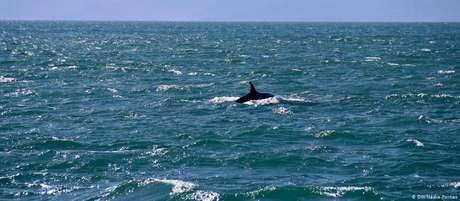 Baleia-de-Bryde é avistada nas imediações de Ilhabela, na última semana de maio