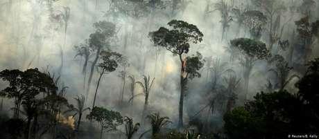 Cerca de 4.5 mil km2 de Floresta Amazônica desmatados estão prontos para serem queimados