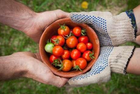 Guia da Cozinha - Gastronomia Sustentável: dicas para aproveitar melhor os alimentos