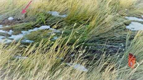 Os dispositivos são plantados em zonas rurais onde há muitos coiotes e raposas