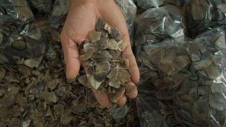 Centenas de milhares de pangolins foram abatidos para uso de suas escamas nos tratamentos da medicina tradicional chinesa