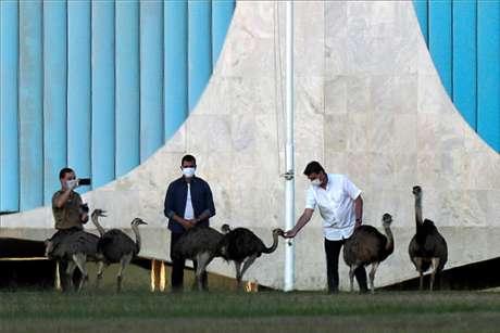 Bolsonaro dá comida a grupo de emas nos jardins do Palácio da Alvorada 13/07/2020 REUTERS/Ueslei Marcelino