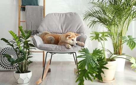 Cachorro no sofá em uma sala de estar com várias plantas em volta