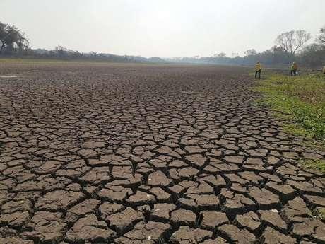 Não chove há meses e áreas normalmente alagadas estão secas no Pantanal do Mato Grosso do Sul.