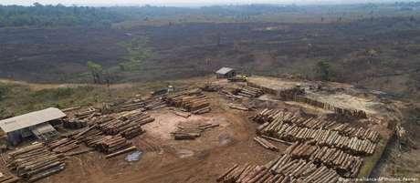 O desmatamento na Amazônia brasileira aumentou pelo 14º mês consecutivo em junho.