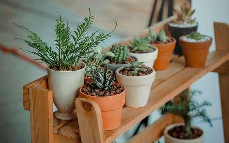 Aumente o astral do ambiente por meio das plantas -