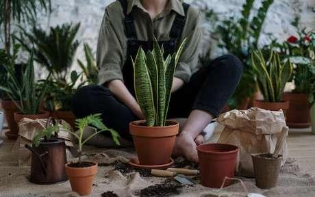 Conheça as plantas que atraem dinheiro -