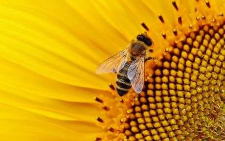 Descubra o que significa sonhar com abelha -