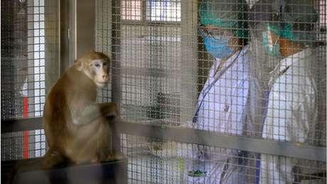 Ao longo da história das vacinas, os animais foram aliados