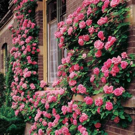 5. Rosa trepadeira no jardim de casa – Via: Pinterest