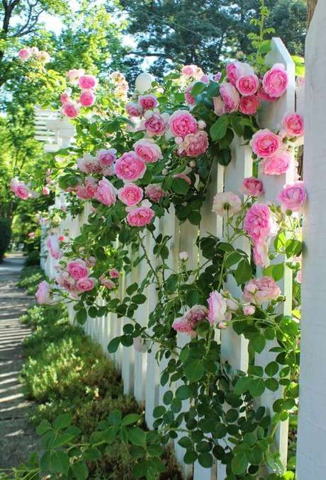 8. Jardim com rosa trepadeira – Via: Pinterest