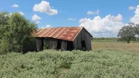Construção abandonada de meeiros sobre o que costumava ser a plantação de Weisiger e onde William Ellis nasceu no sul do Texas