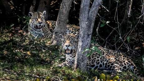 Pantanal está localizado nos estados de Mato Grosso do Sul e Mato Grosso e também nos países Bolívia e Paraguai
