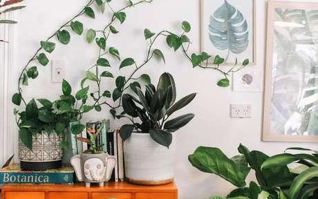 Conheça as plantas que afastam as energias negativas -
