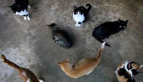 Os gatos se sairiam melhor do que os cães em caso de extinção humana