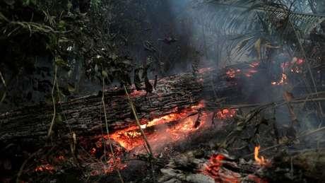 Projeto sobre desmatamento é debatido entre ambientalistas e representantes do agronegócio