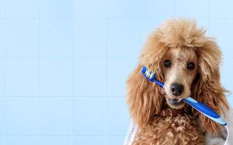 Cachorro segurando com a boca uma escova de dente