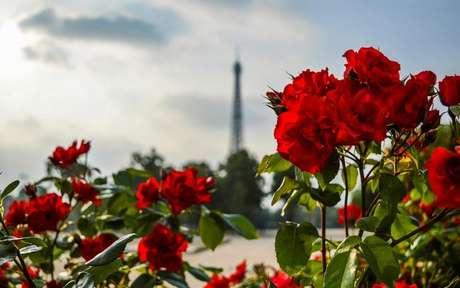 Confira o poder das plantas do amor -