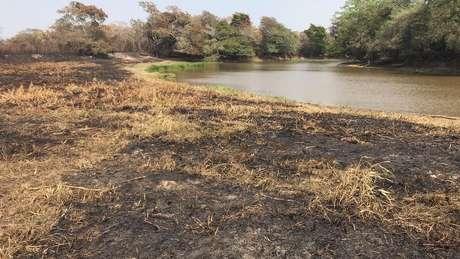 Queimadas atingem diversas áreas do Pantanal e afetam duramente a fauna e a flora da região