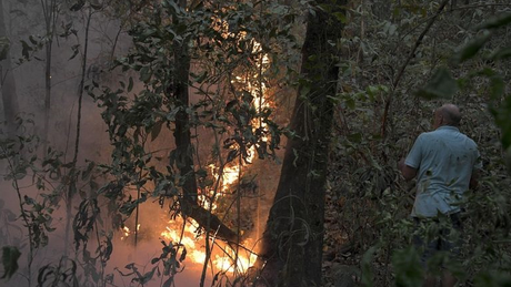 Uso do fogo na agropecuária, associado a seca histórica, levou a situação desoladora no Pantanal