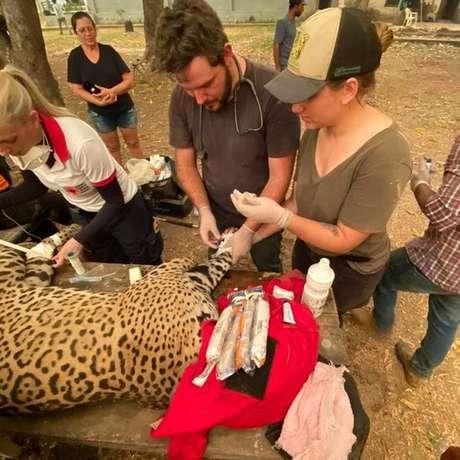 Grupo liderado por Eduarda (de boné) resgatou onça-pintada vítima do fogo no Pantanal