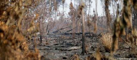 Floresta destruída nos arredores de Apuí, no Amazonas