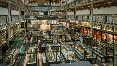 O museu Pitt Rivers tem uma coleção de cerca de 500 mil itens