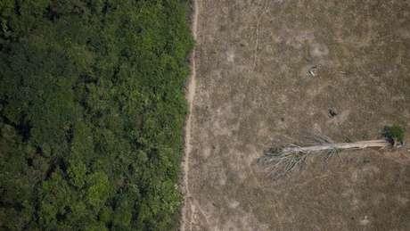 Estimativas apontam que Amazônia pode sofrer dano ambiental irreversível em até 30 anos