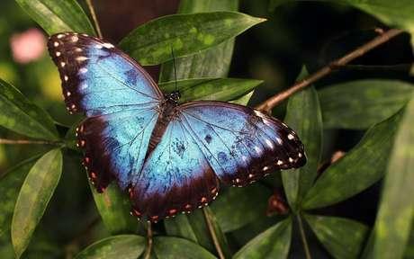 Conheça todo o poder espiritual das borboletas -