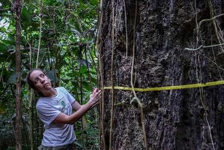 Bióloga estuda os impactos do fogo na Floresta Amazônica
