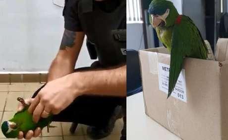 Segurança salva a vida de papagaio com massagem cardíaca