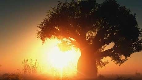 Os primeiros humanos saíram da África há cerca de 180 mil anos
