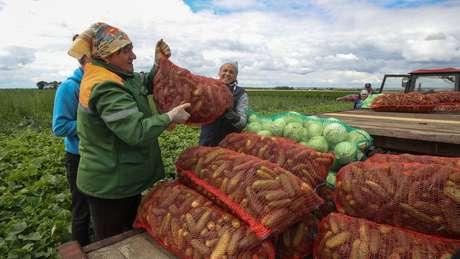 Maior parte das terras usadas para agricultura é propriedade do Estado e emprega quase 10% da população de Belarus