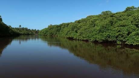 Manguezal é considerado um ecossistema essencial para o planeta: é berçário da vida marinha e contribui para o combate do aquecimento global